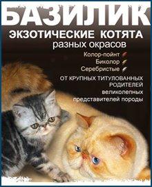 Питомник персидских и экзотических кошек БАЗИЛИК